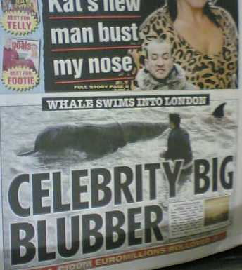 loads of pun best tabloid headlines to make you smile